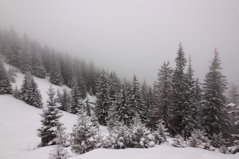 Ciemniak zima Tatry