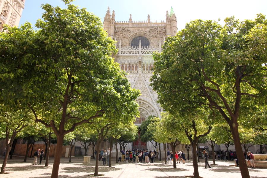 Katedra Sewilla dziedziniec