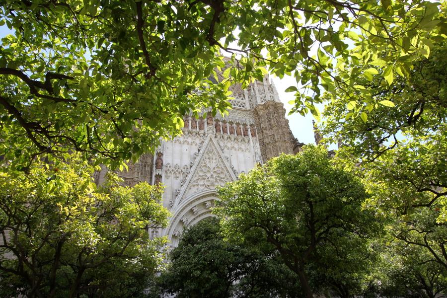 Katedra Sewilla