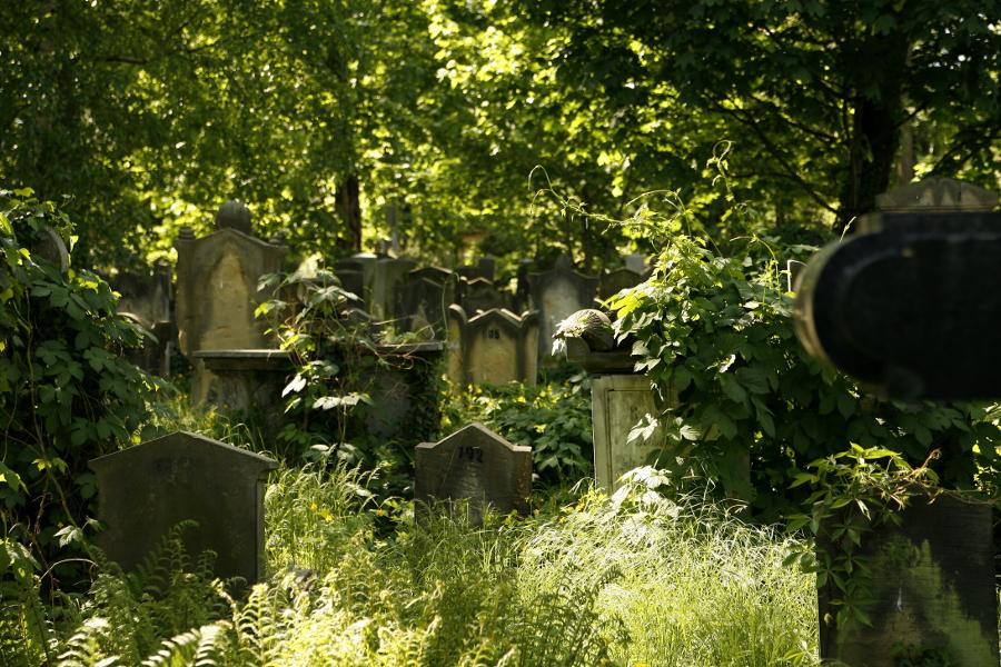 Wrocław stary cmentarz żydowski