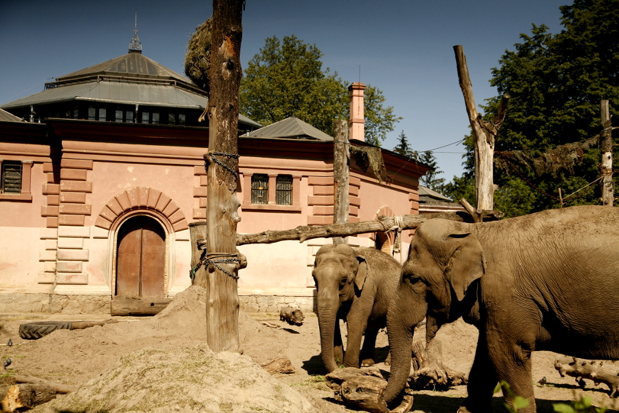 zoo Wrocław słonie