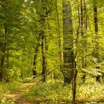 Puszcza Białowieska – królowa polskich lasów