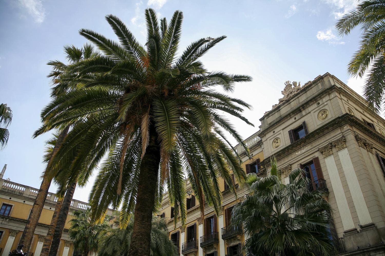 Barcelona Plac Real