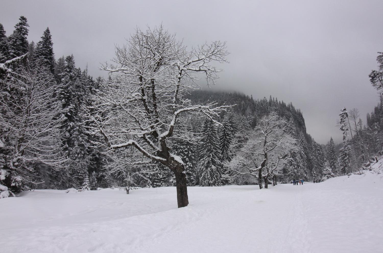 Dolina Kościeliska zima Tatry