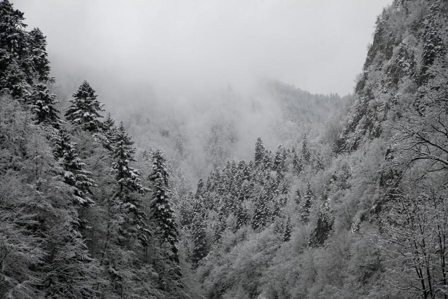 zima Pieniny drzewa