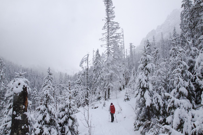 Dolina Roztoki zima