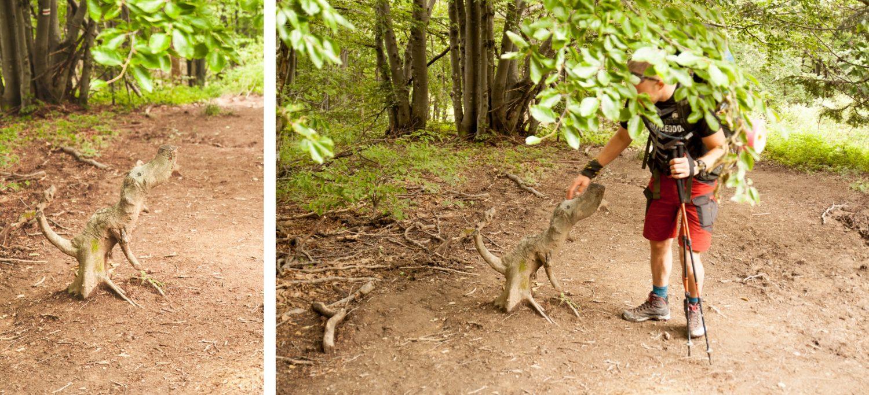 dinozaur pies z drzewa Bieszczady