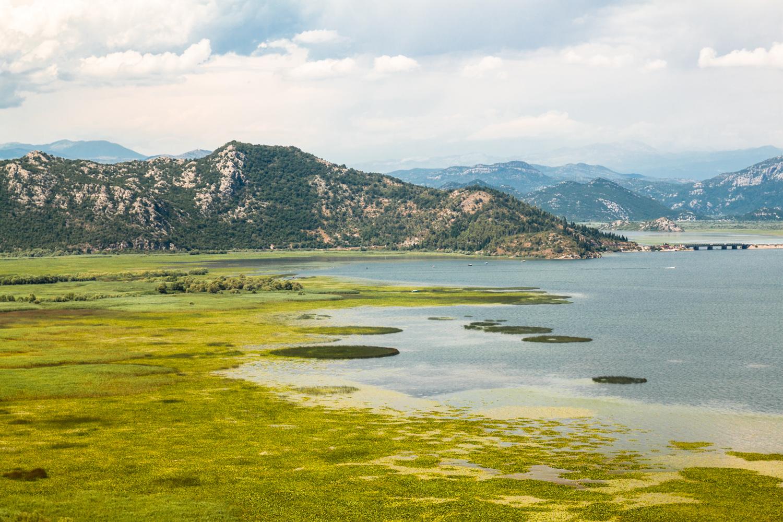 Jezioro szkoderskie czarnogora